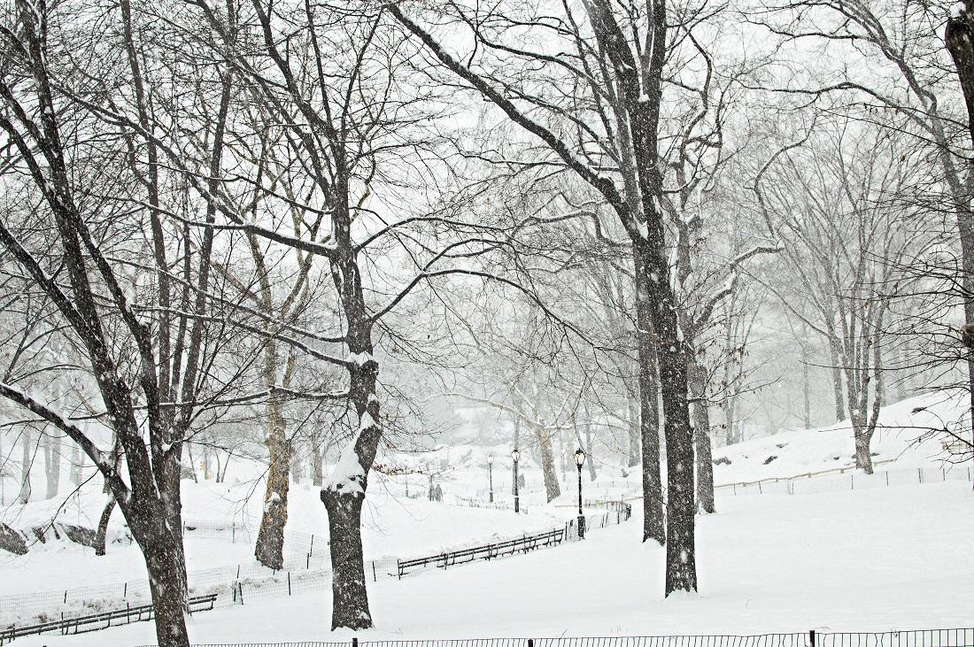 central park snow trees