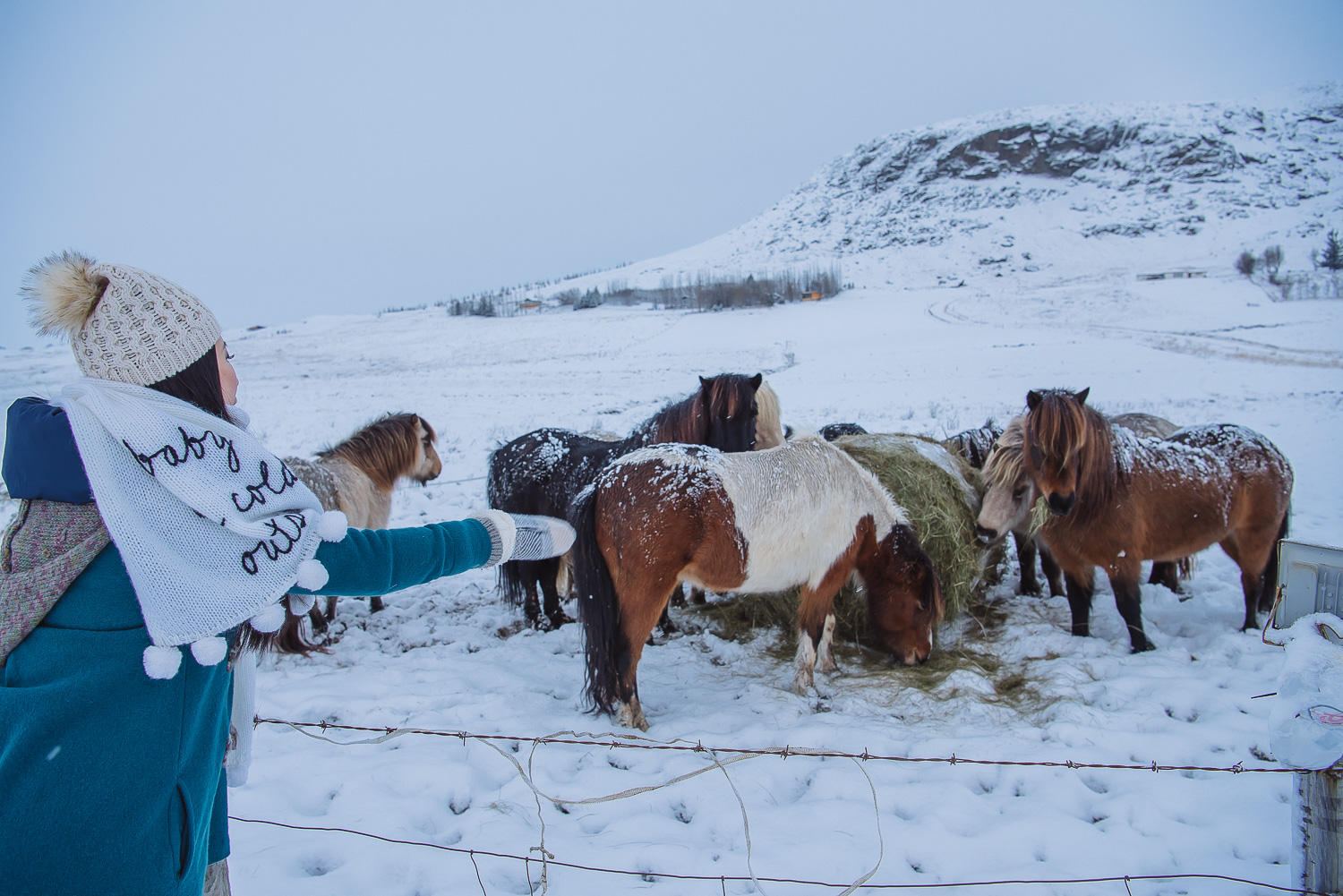 iceland ring road horses 1