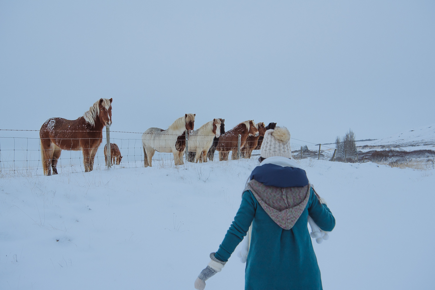 iceland ring road horses 13