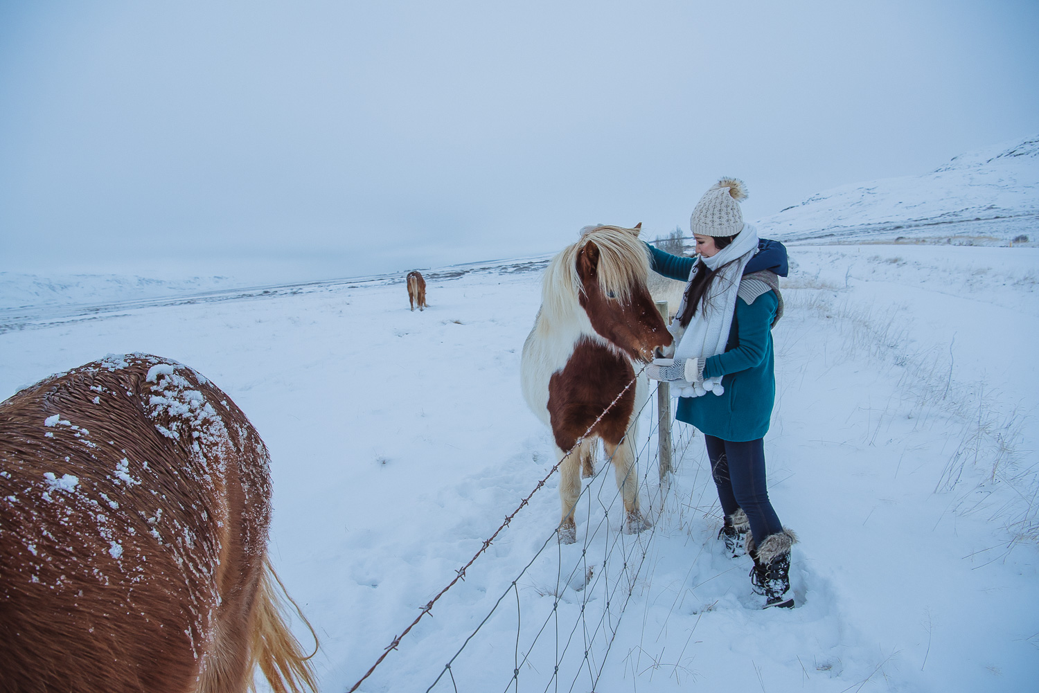 iceland ring road horses 15