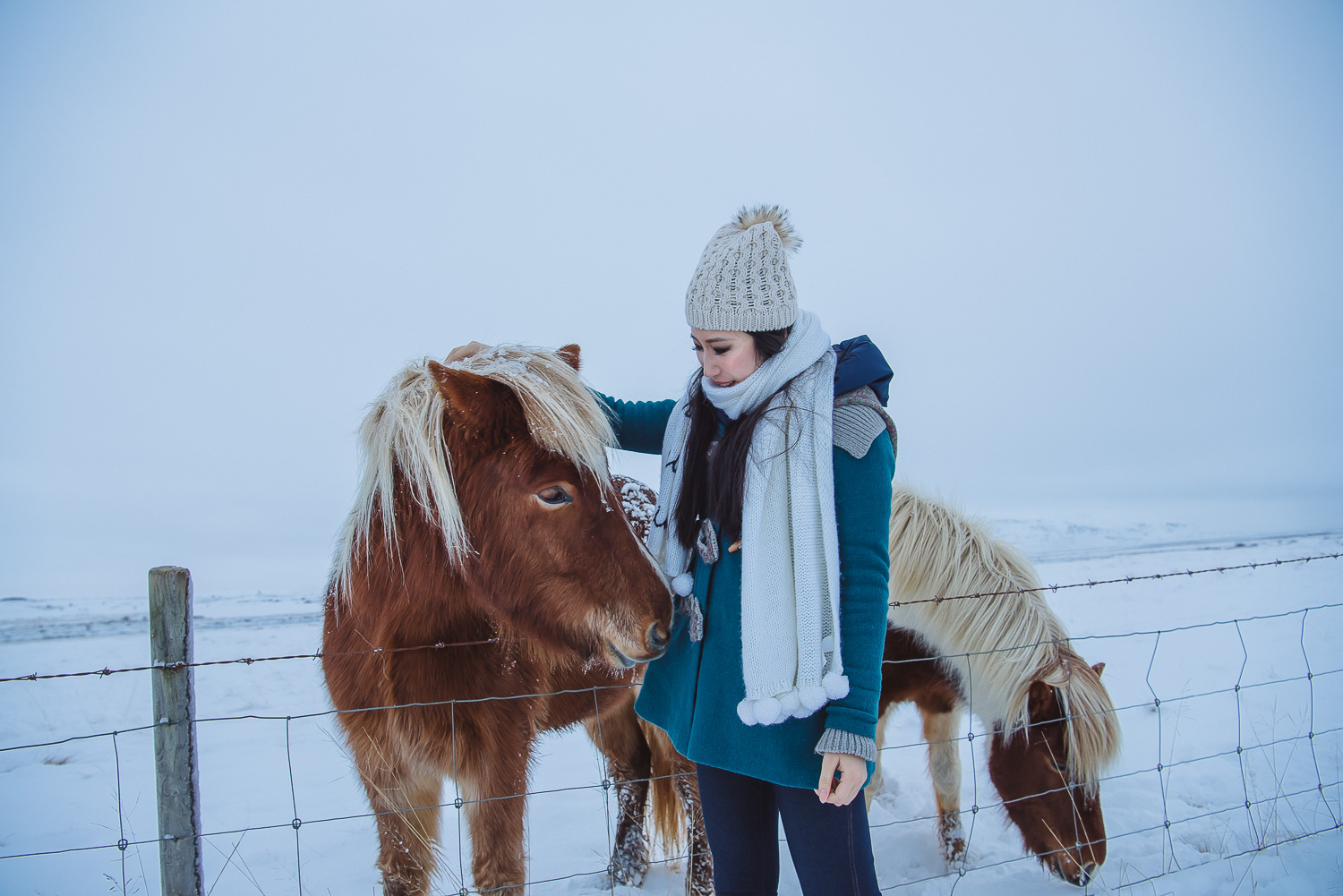 iceland ring road horses 17