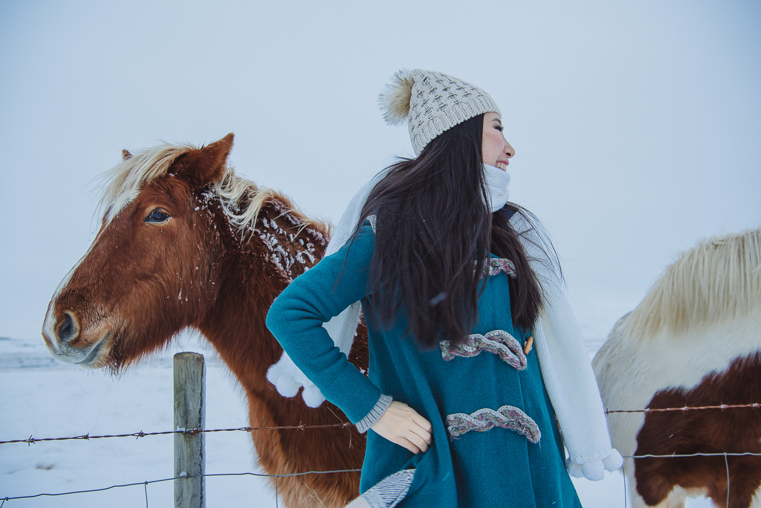 iceland ring road horses 18