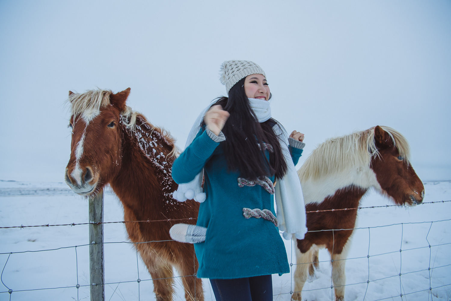 iceland ring road horses 19