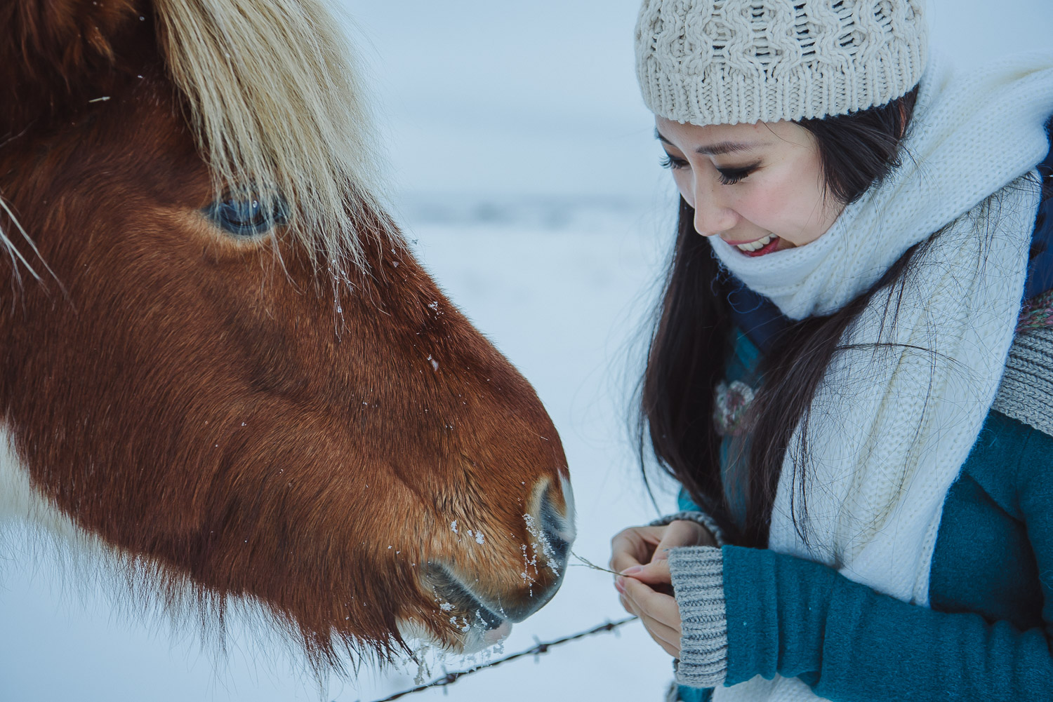 iceland ring road horses 20