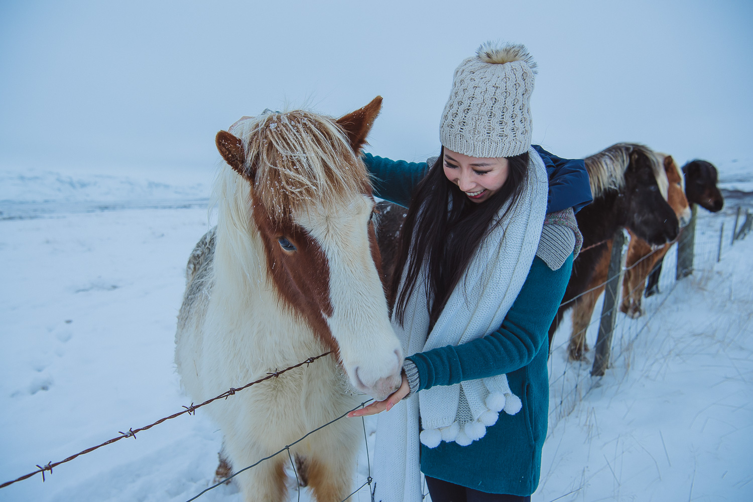iceland ring road horses 21