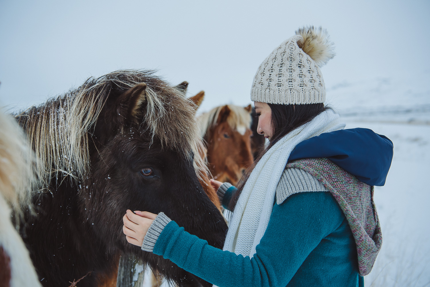 iceland ring road horses 23