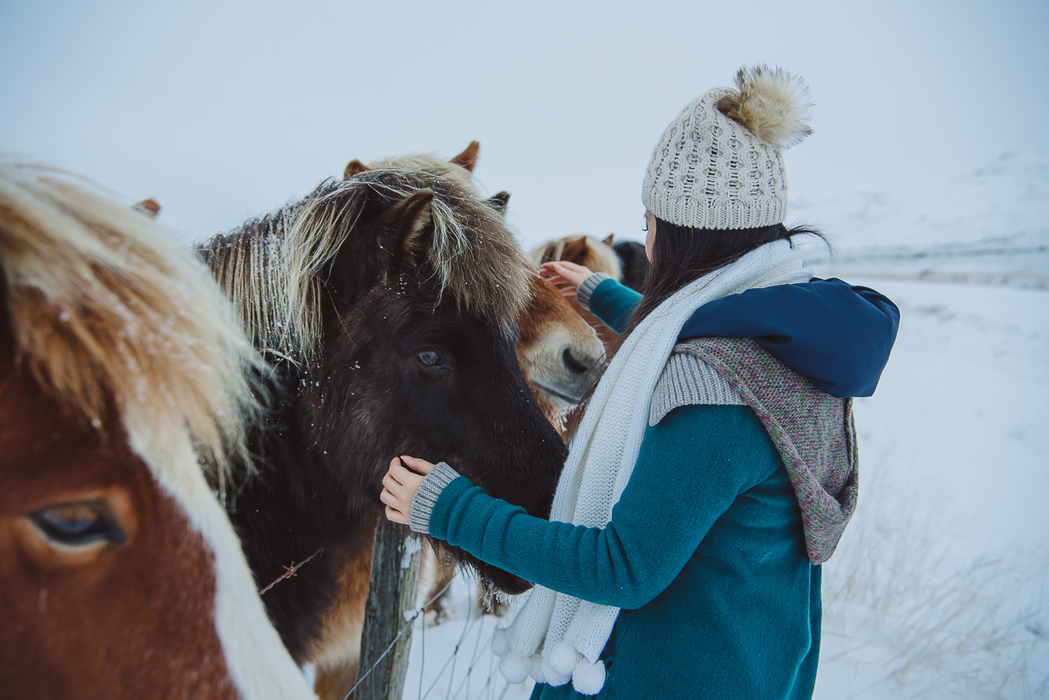 iceland ring road horses 24