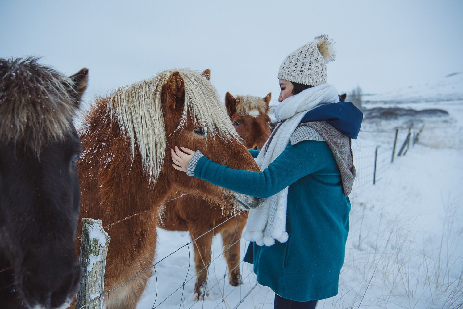 iceland ring road horses 25
