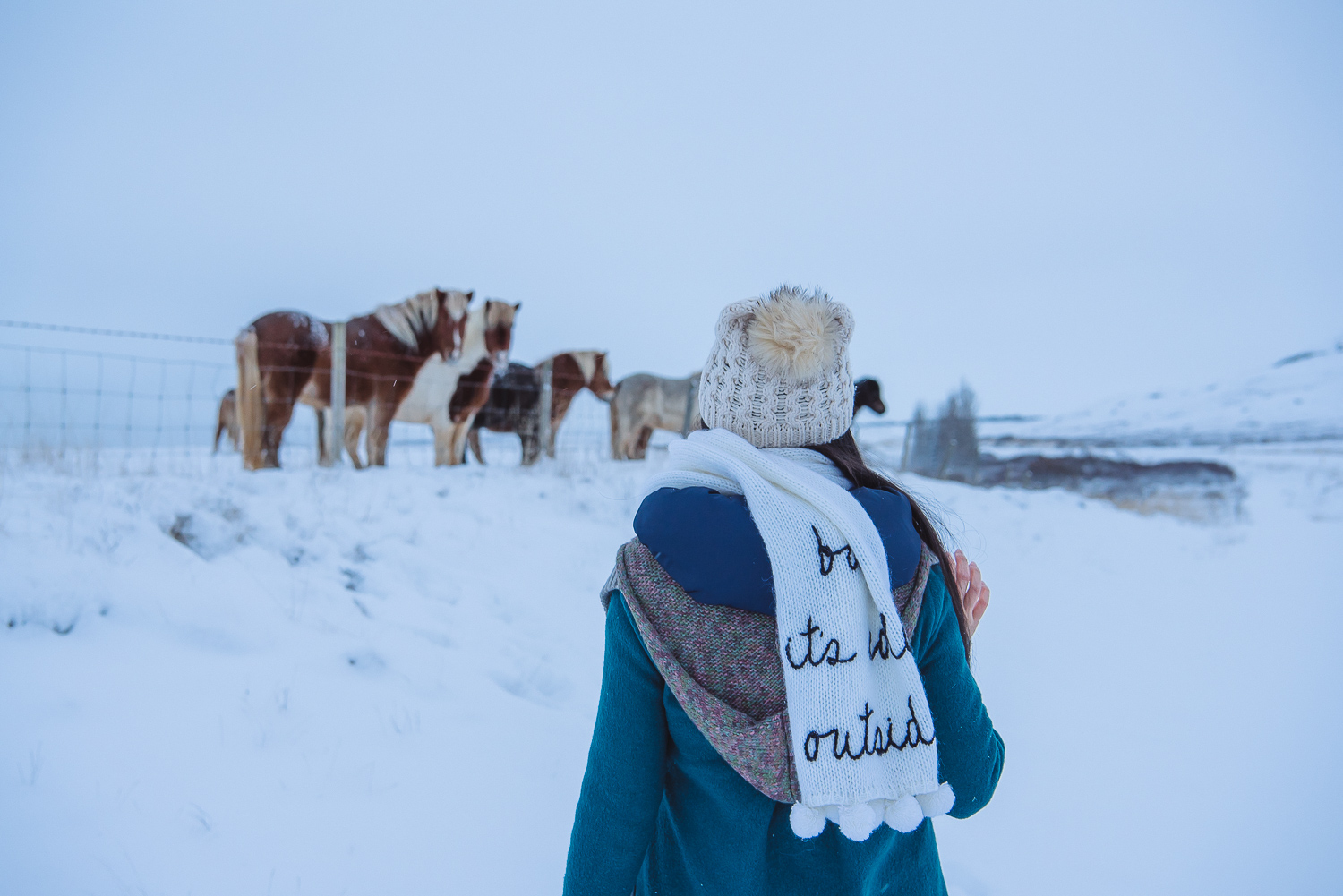 iceland ring road horses 27