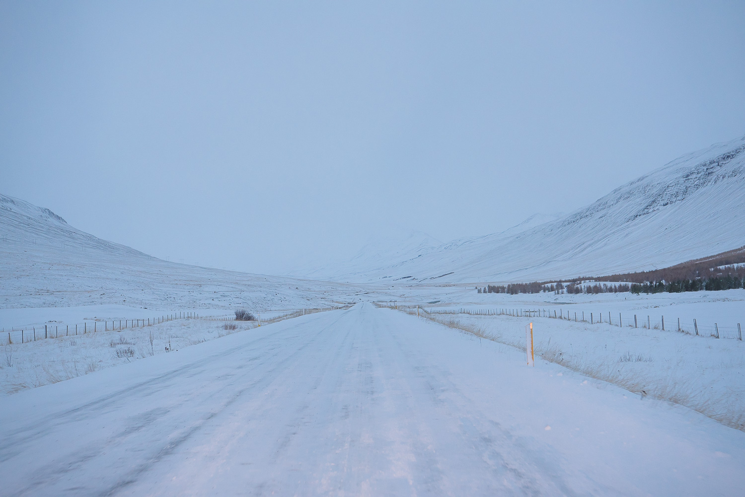 iceland ring road horses 29