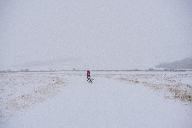 dog sledding iceland 11