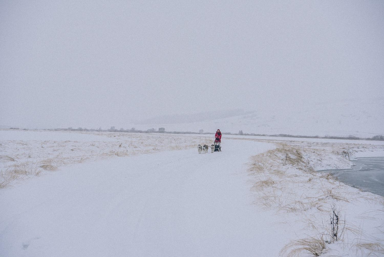 dog sledding iceland 12
