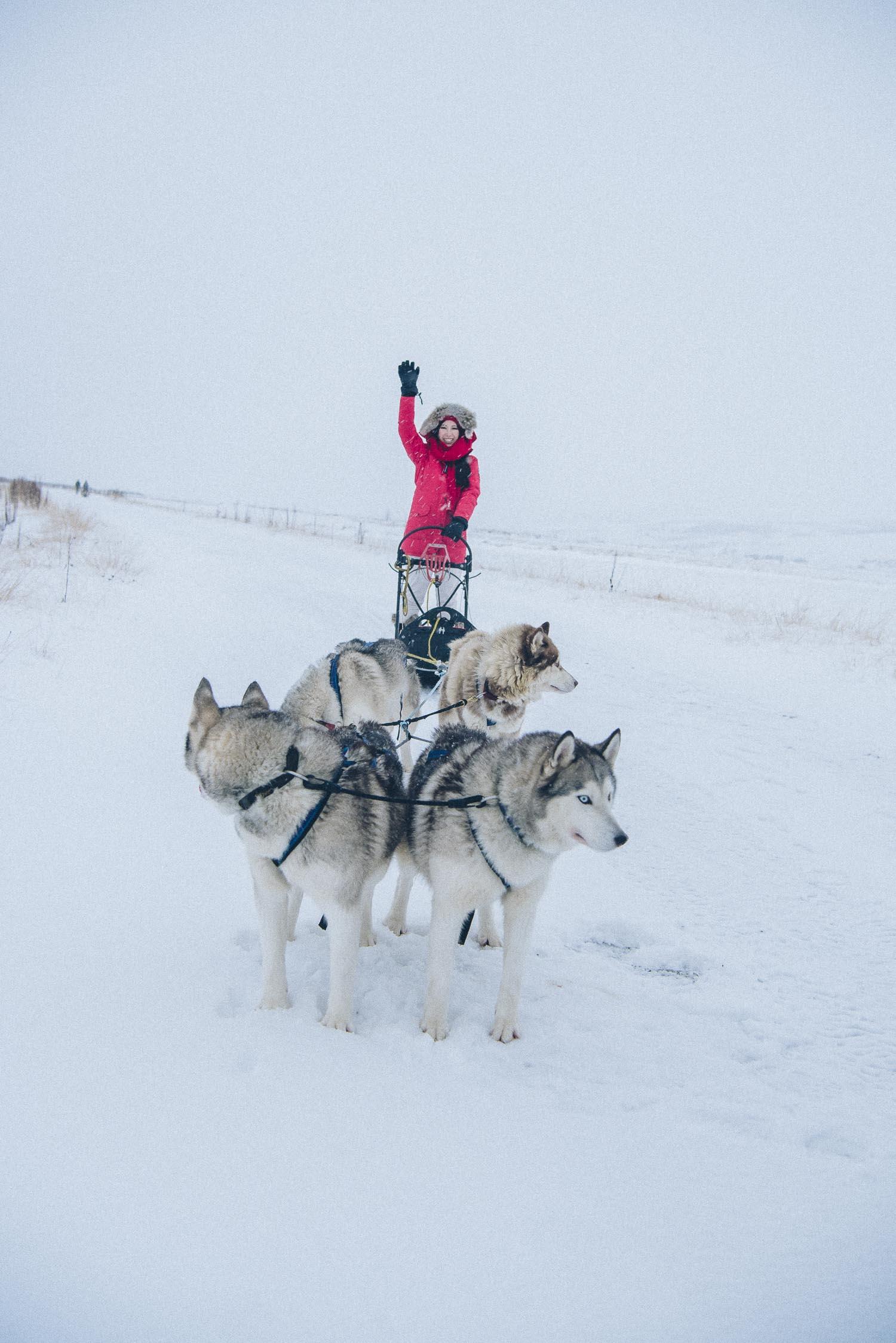 Dog Sledding, Iceland
