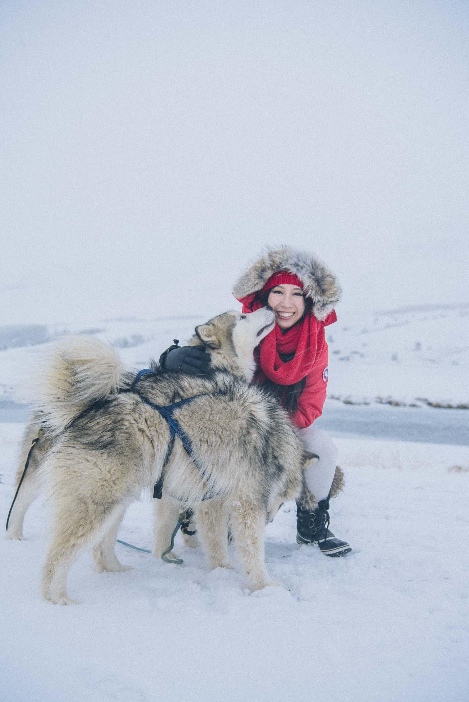 dog sledding iceland 21