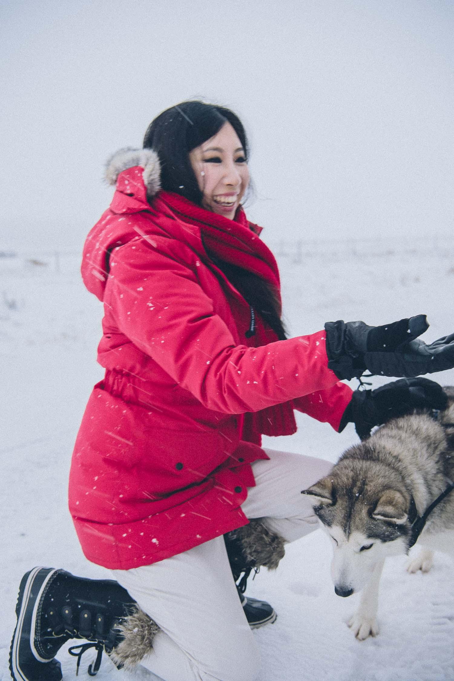 dog sledding iceland 22