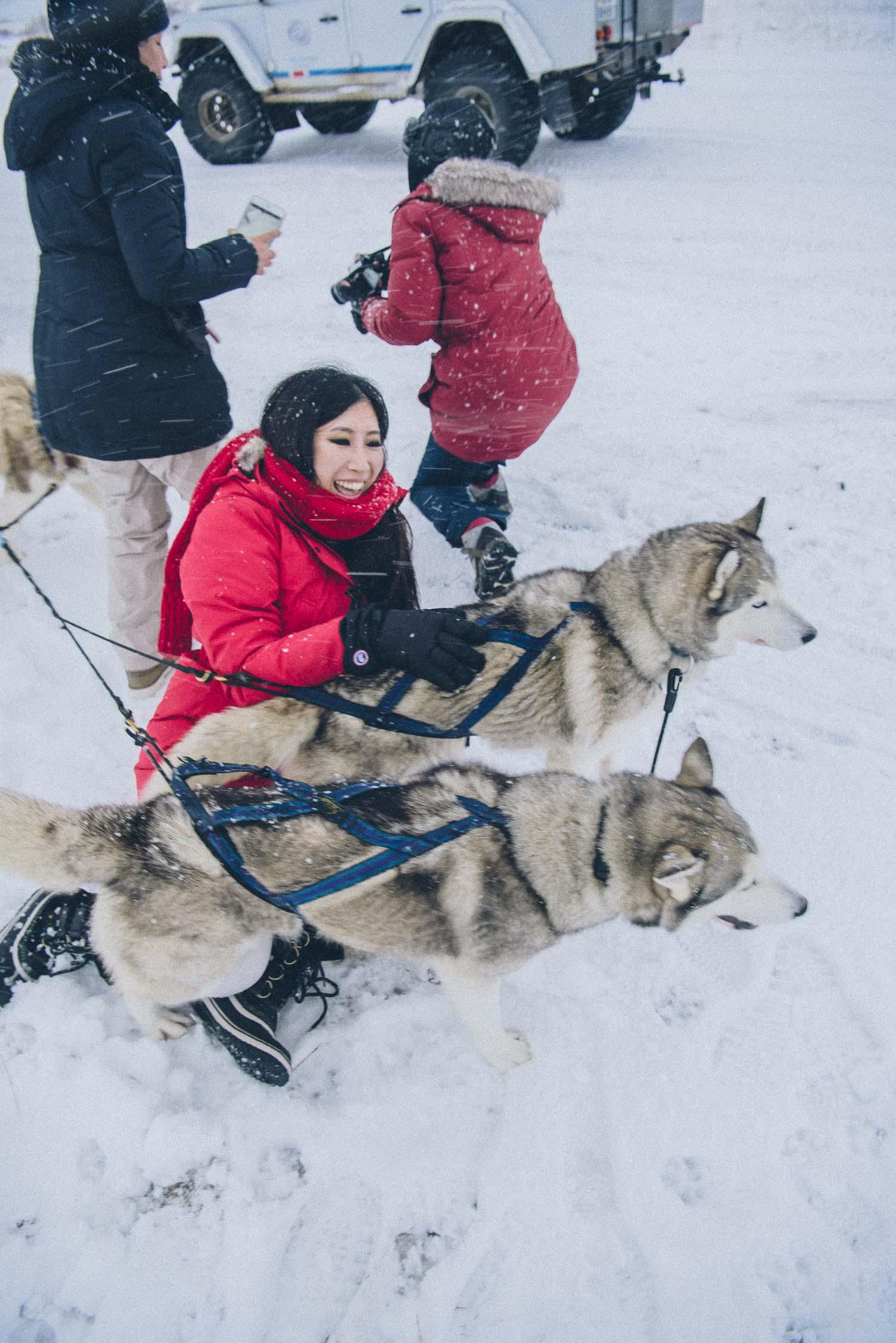 dog sledding iceland 23