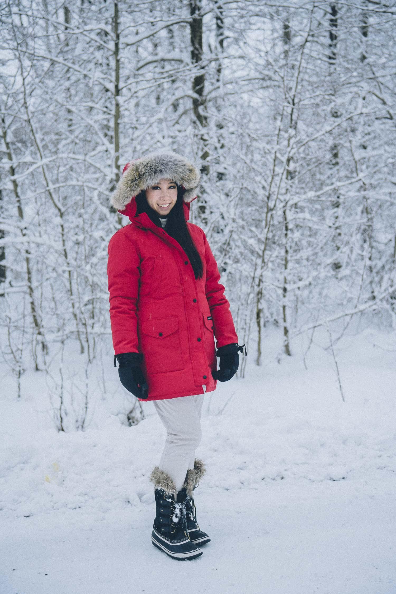 dog sledding iceland 27