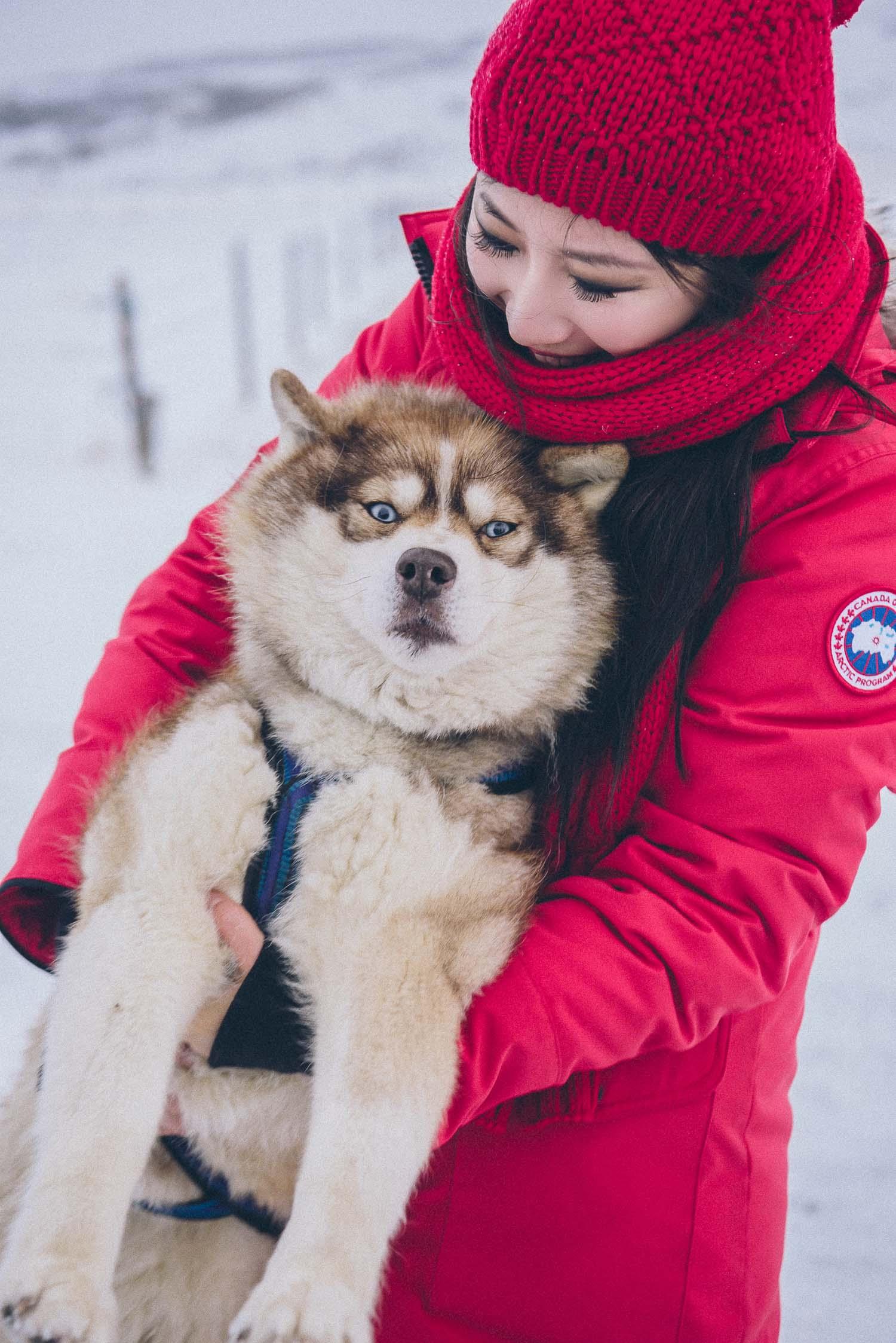 dog sledding iceland 29
