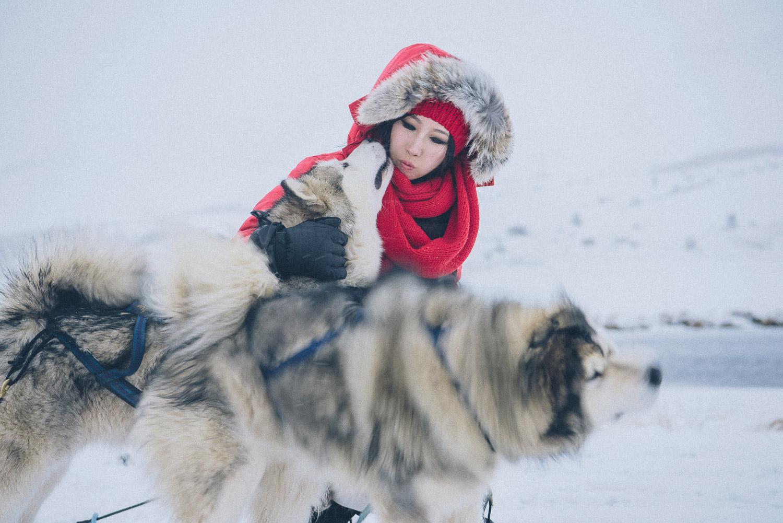 dog sledding iceland 30