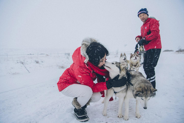 dog sledding iceland 31