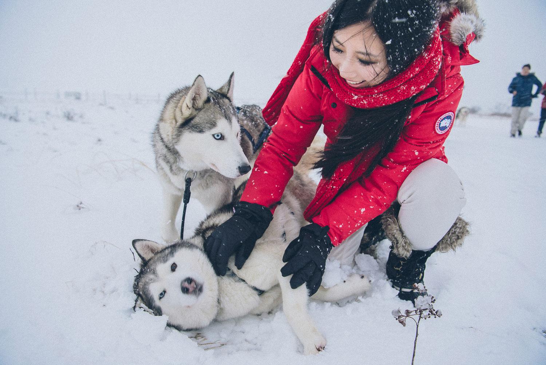 dog sledding iceland 32