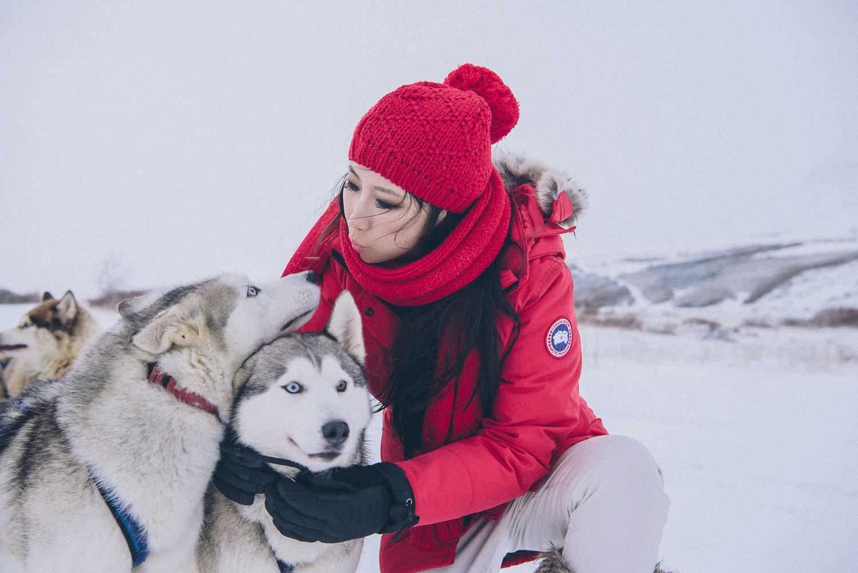 dog sledding iceland 33