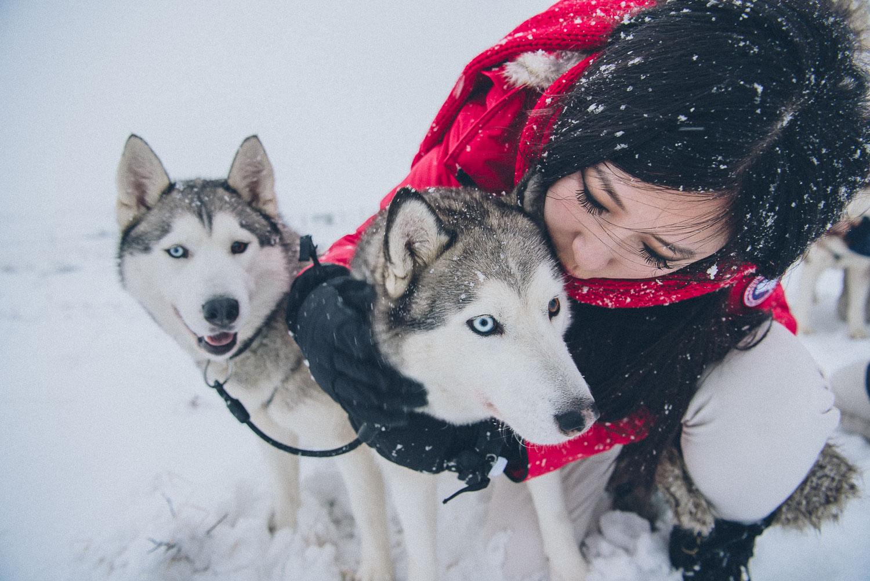 dog sledding iceland 5