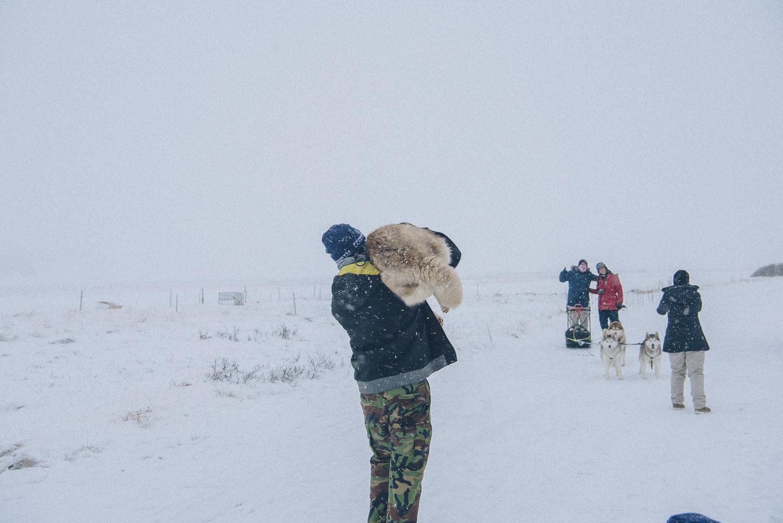 dog sledding iceland 8